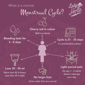 A normal Menstrual Cycle